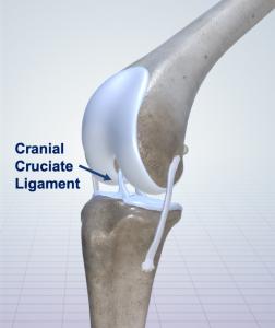 CCL Treatment Diagram