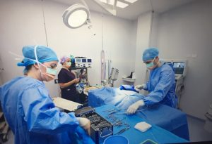 Veterinary Surgeons in Surgery