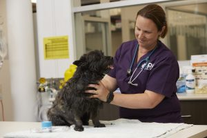 VRH Veterinary Nurse with Patient